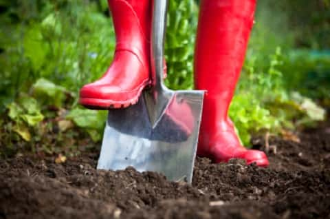 Red boot matching a spade into a garden humus in an attempt to till the soil.