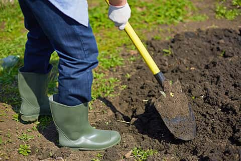 A male hand is holding a shovel to excavate the humus soil in a garden.