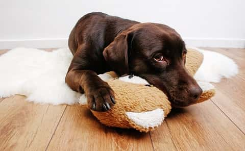 A brown dog lying on a fluffy white cotton with its head resting on a doll.