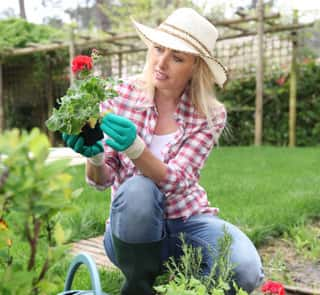 A female gardener observing the yellow leaves of a flower with overall green leaves and red petals.