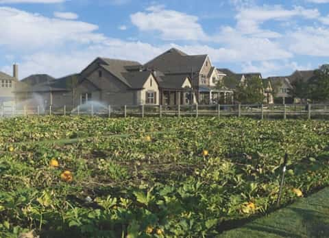 Garden plots ripe with produce sit in front of new homes in the Harvest master-planned community in Argyle, Texas, just outside of Dallas.
