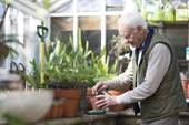 Elderly man working on plants.